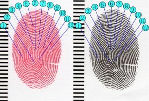 6指紋の照合画像