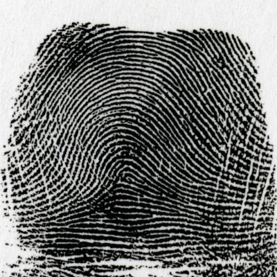 右偏流弓状紋とは、左の指紋と逆の模様を言います