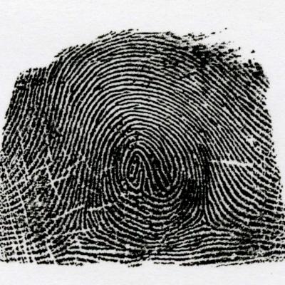 異種混合紋とは、2種類の模様が混ざっている模様を言います。この写真の場合は、渦状紋と蹄状門が混ざっています